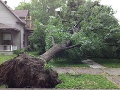Storm Damage in Minneapolis (June 20-21, 2013)